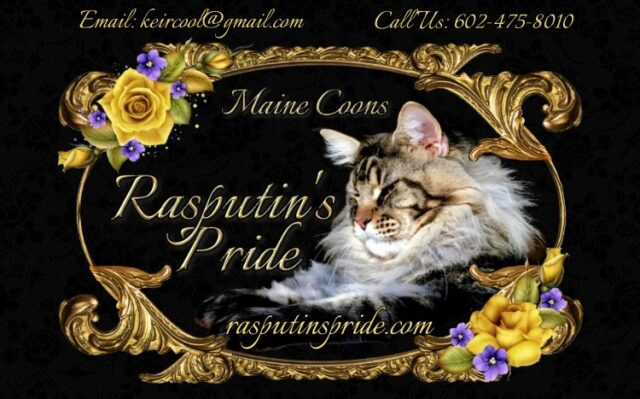 Rasputins Pride Maine Coons of Arizona linkback banner