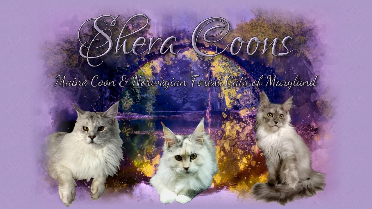 SheraCoons