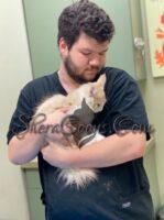 Kitten wellness check