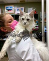 Wiley Kit vet check up
